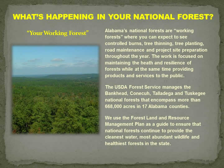 What's Happening on Your National Forest