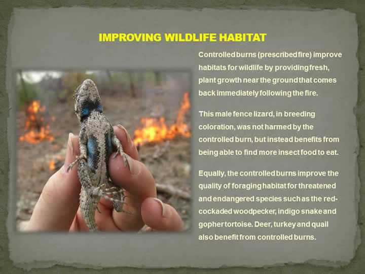 Improving Wildlife Habitat