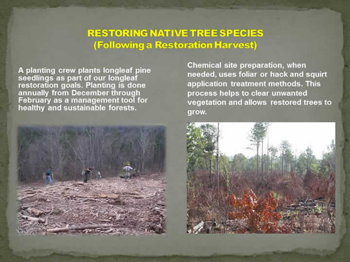 Restoring Native Tree Species