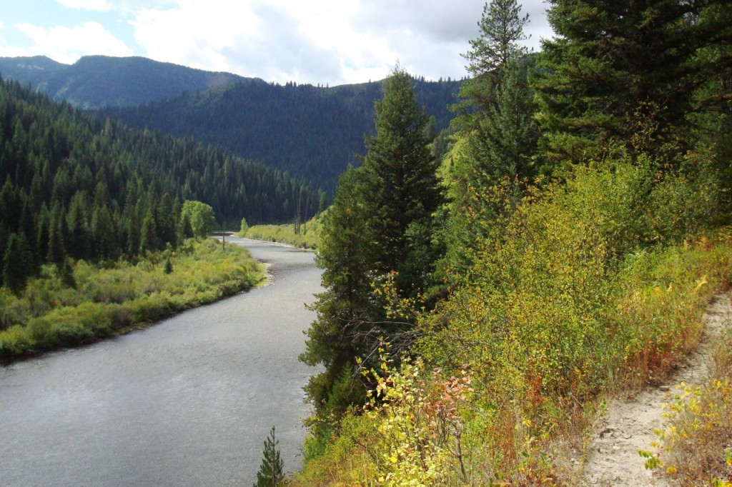 View of Kelly Creek from Trail #567