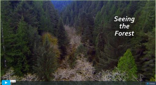 Screen shot of opening video with heavily wooded forest