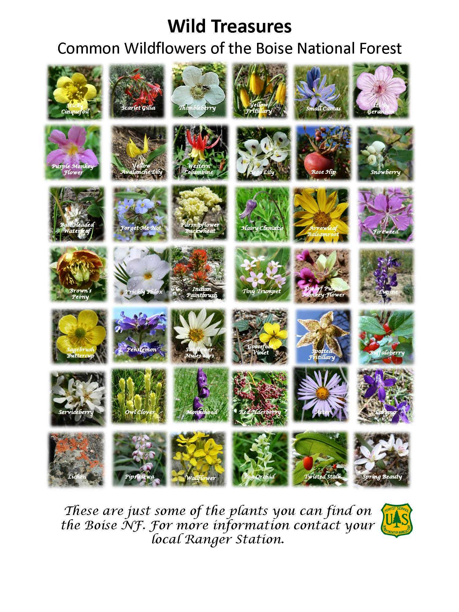 A poster covered in square photos of wildflowers with common names