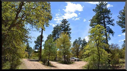 Horse Camp is in the cool pines of Central Arizona