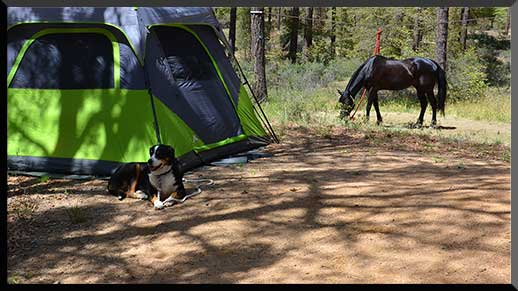 Horse and dog relax in the shade at Groom Creek Horse Camp