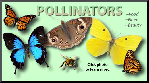 Click photo for more information about bees, butterflies, and other pollinators.