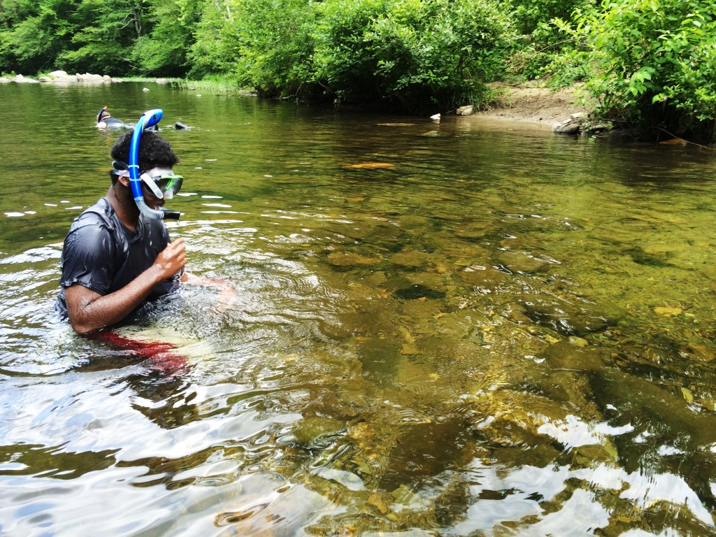 A forest visitor snorkels on the Conasauga River.