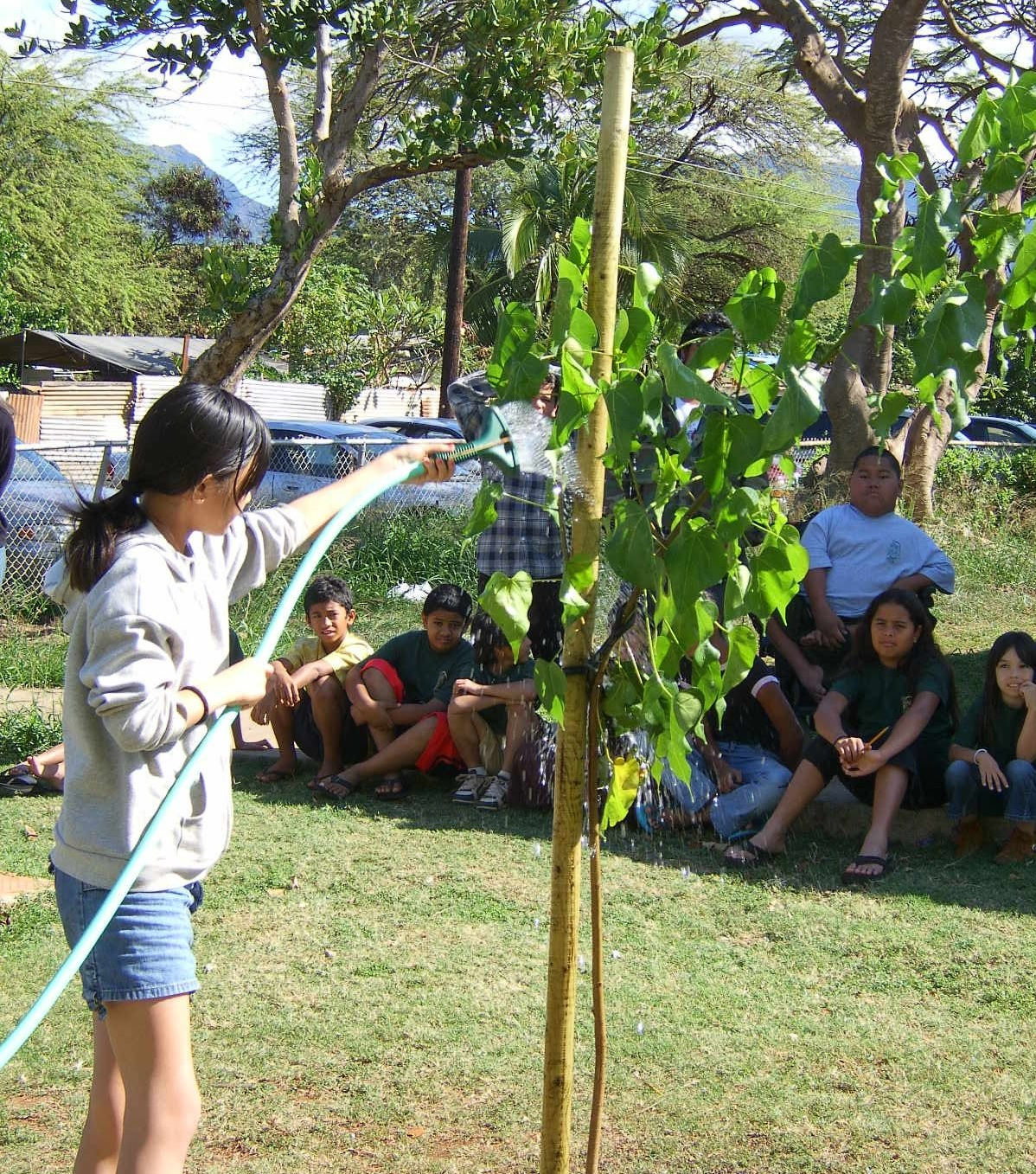 Girl watering a newly planted tree, group of children in background sitting, watching