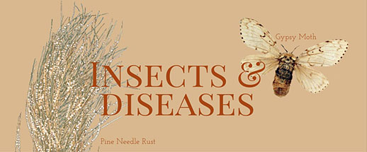 Insects and Diseases Homepage