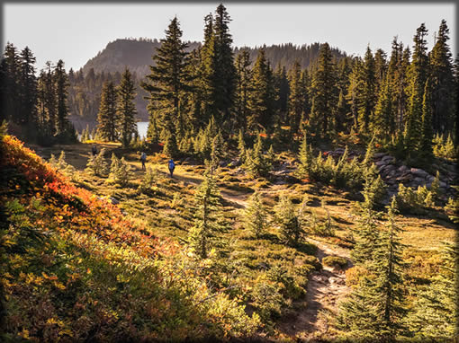 A trail with hikers through Jefferson Park - Mt. Jefferson Wilderness