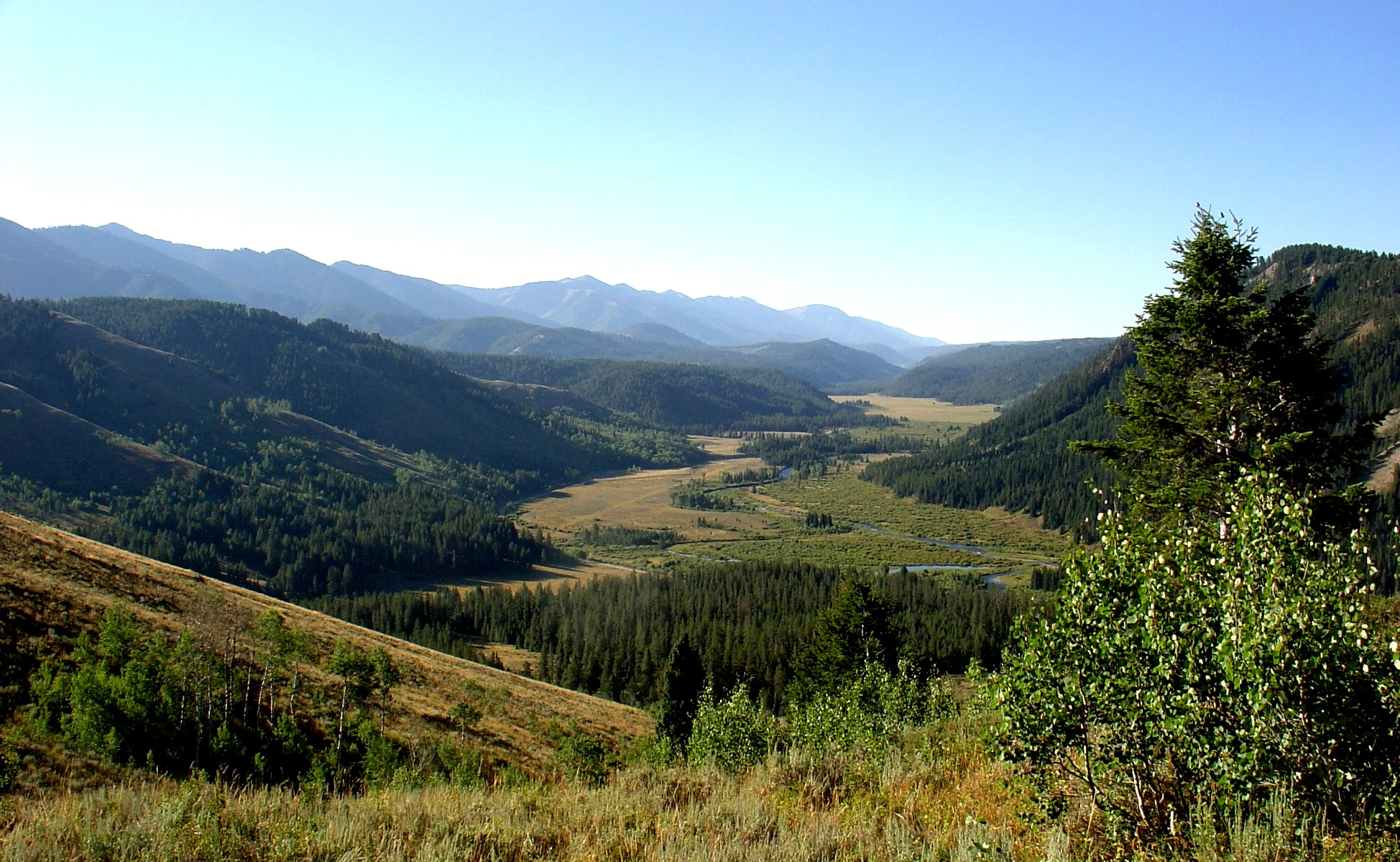 Greys River Valley on the Greys River Ranger District
