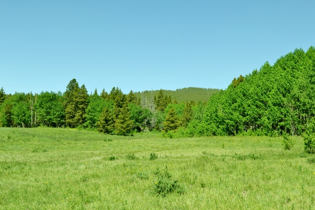 Open meadow with trees in background