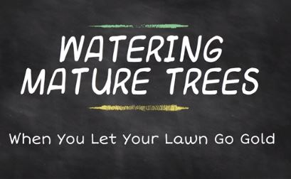 Screenshot of video with the text: Watering Mature Trees, When You Let Your Lawn Go Gold