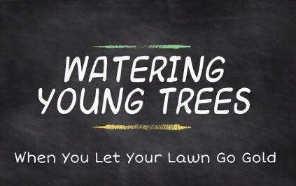 Screenshot of youtube video with text: Watering Young Trees, When You Let Your Lawn Go Gold