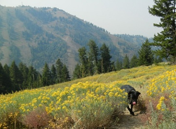 Picture of valley with Rabbitbrush and dog