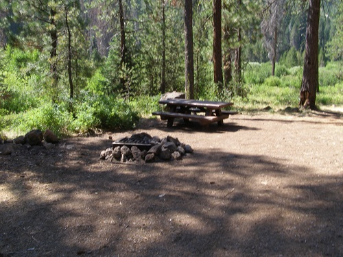 Wooded campsite at Dead Horse Creek.