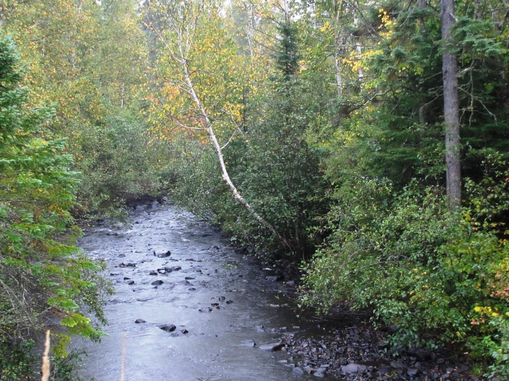 The Poplar River flowing past fall trees.