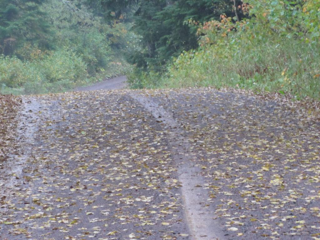 Tire tracks through fall leaves on a dirt road.