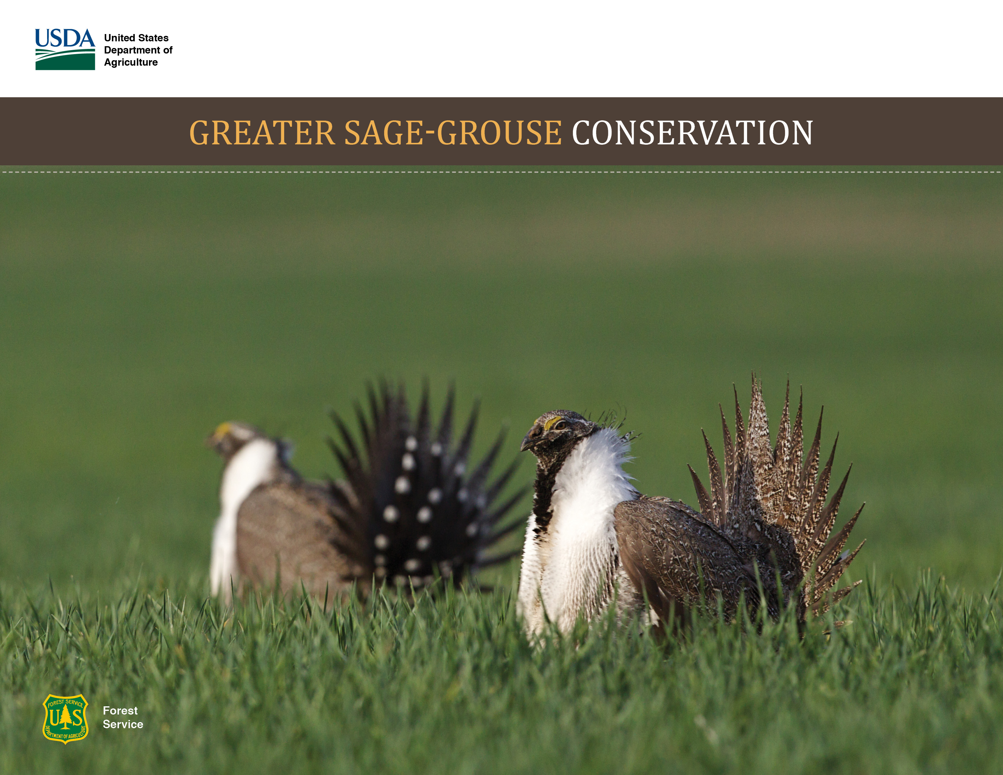 Greater Sage Grouse Conservation