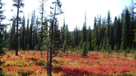 Fall colors on the Bitterroot National Forest
