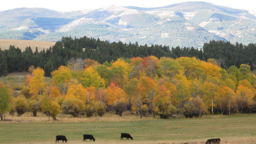 Fall colors on the Helena National Forest
