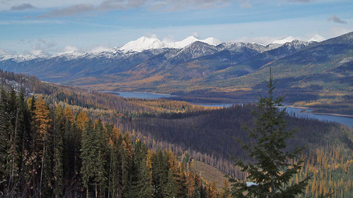 Fall colors on the Flathead National Forest