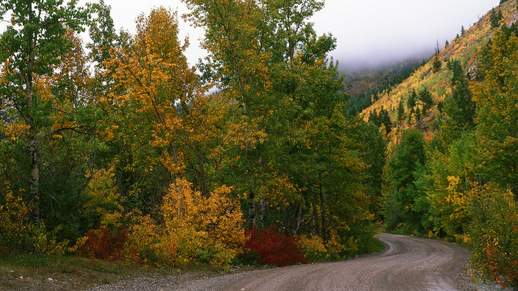 Fall colors on the Lewis & Clark National Forest
