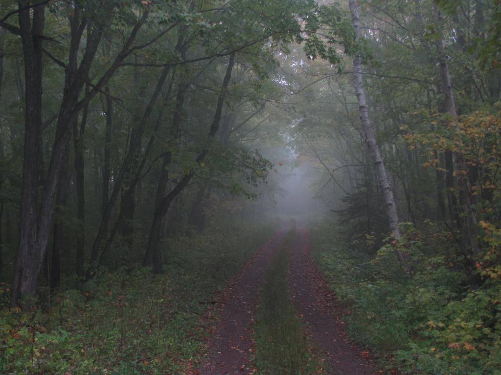 A gravel road going through a dark woods.