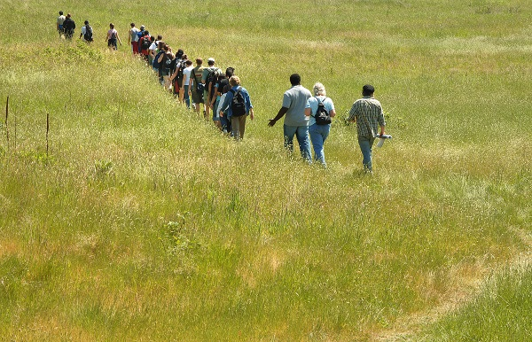Students and teachers cross a field of long grass in line.