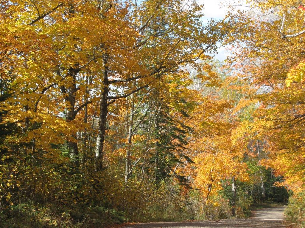 A road on the fall color tour at peak color.