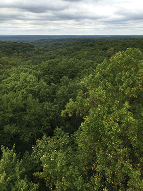 View from the Hickory Ridge Lookout Tower, September 28, 2015.
