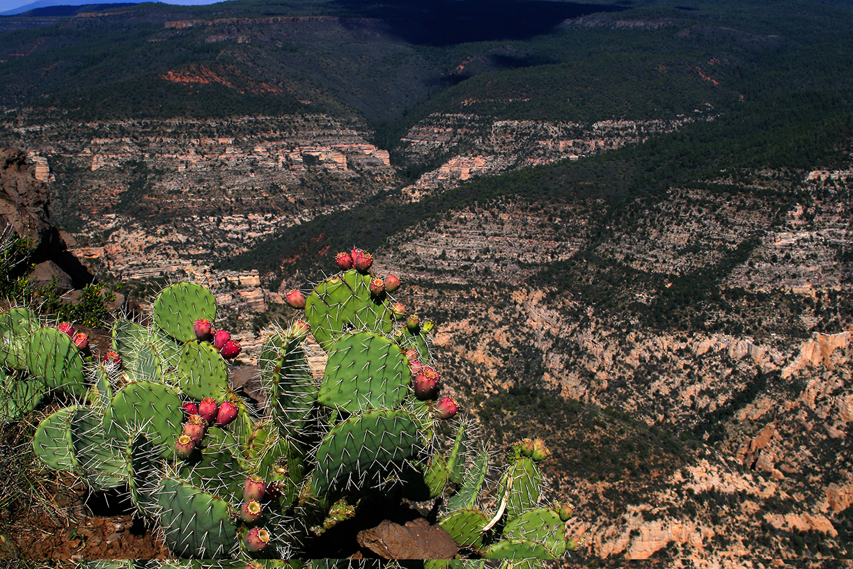 Sycamore Canyon with Prickly Pear Cactus