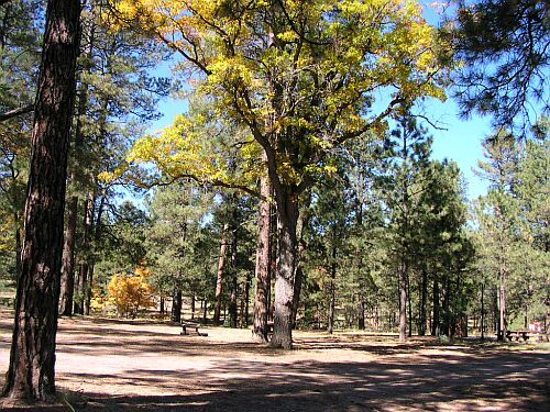 Armijo Springs Campground