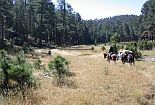 Horseback riders cross meadow on the Gila Wilderness