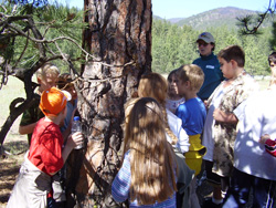 Photo of kids and an instructor examining the trunk of a tree.