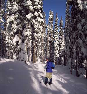 Photo of a cross-country skier on the trail. Snowy trees and blue sky too.