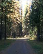 Photo of Fly Flat Campground