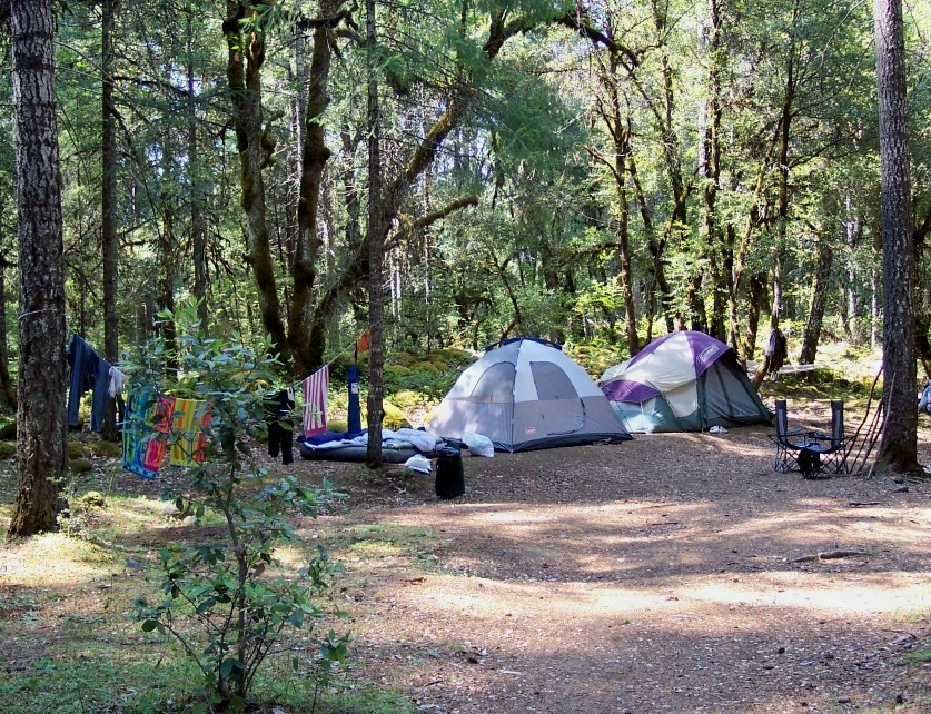 Colorful tents and camping gear under large towering conifers