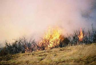 [Photograph]: Burning brush during the prescribed burn.