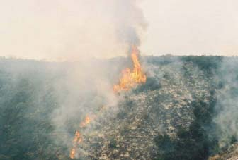 [Photograph]: Large flames are seen during the prescribed burn.
