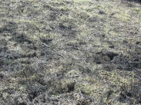 [Photograph]: Green grass is left in the burned area