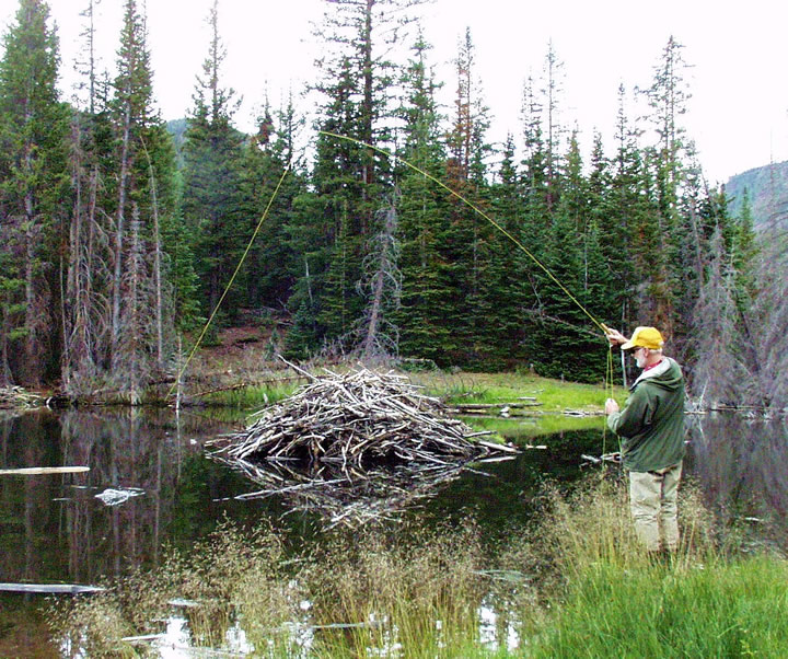 Image of a man fishing a beaver pond
