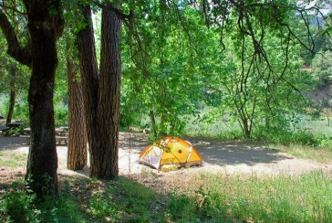 Small yellow tent under the trees at Curly Jack Campground