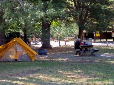 Bright colorful tents on green lawn under the trees at Tree of Heaven Campground