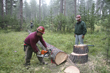 Northern Hills RD employees cut timber