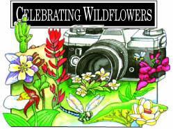 Celebrating Wildflowers Logo