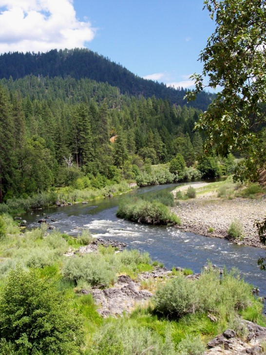 Tree lined Klamath River in Summer
