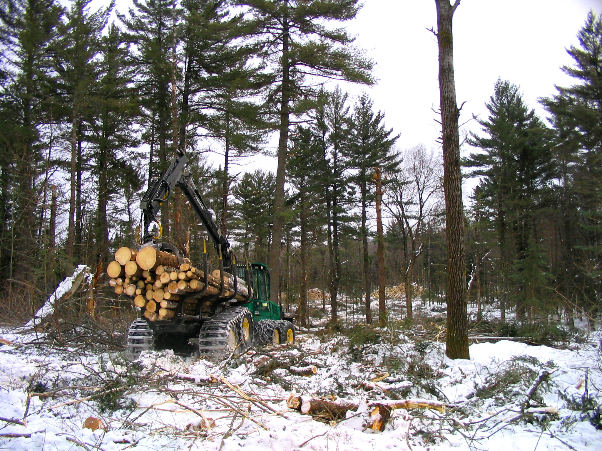 Logging in the Winter