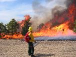 Maintaining a fire-adapted landscape