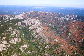 Mountain Pine Beetle Aerial