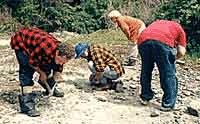 Photo of people looking for rocks.